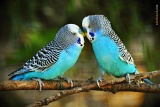 Láska je láska